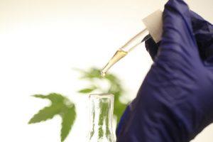 CBD Öl, aktuelle Rechtslage